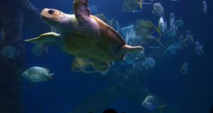Zoos & Aquariums: More than Meets the Eye
