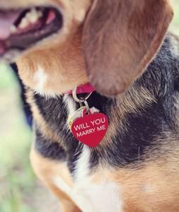 6-91074-dog-collar-proposal-1422407039