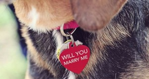 Spring Fever – Fun Ways to Include Your Pet in Your Wedding Planning