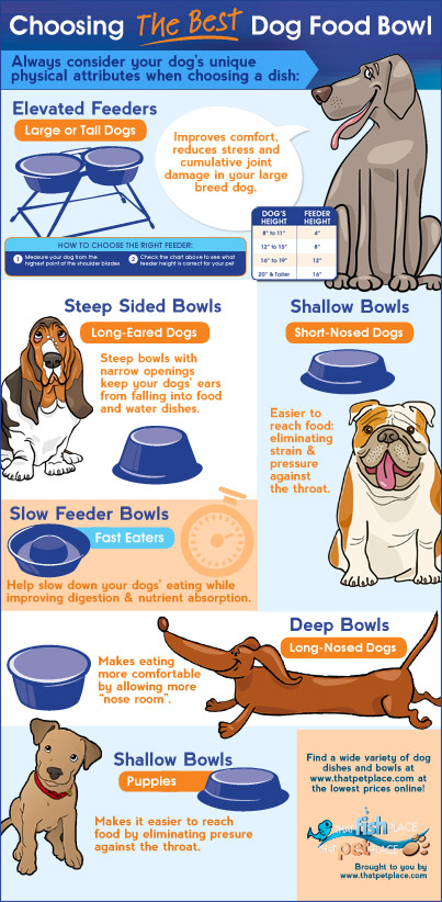 Choosing a dog bowl