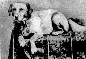 Fido-Lincolns-dog-300x207