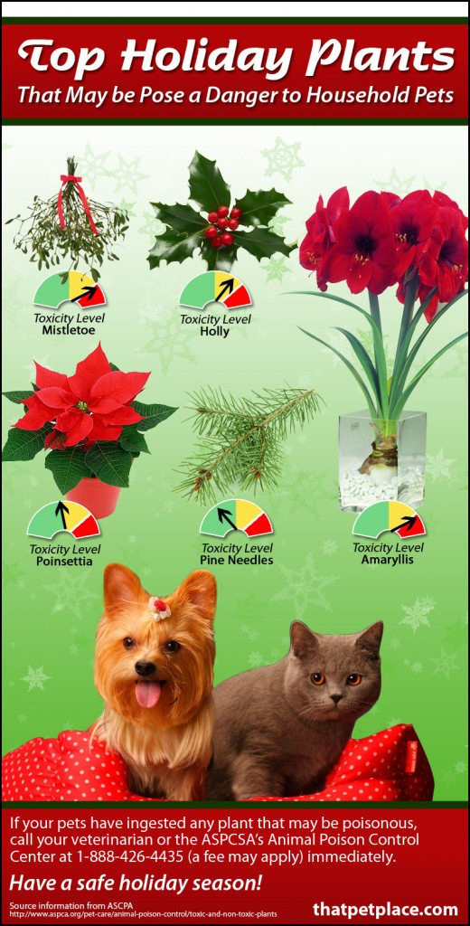 Toxic Holiday Plants