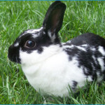 Bunny Proofing Your Backyard:  Keeping Pet Rabbits Safe Outdoors