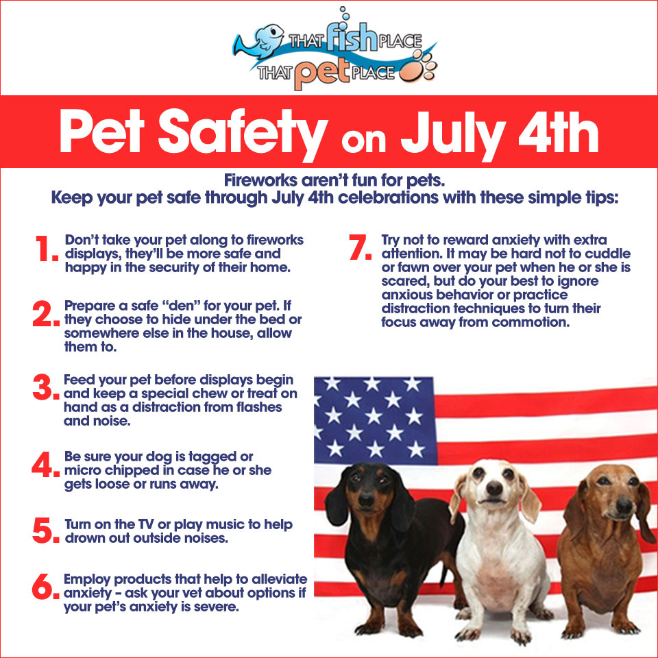 Avoid Bringing Your Pet To Fireworks Displays Even If They Are Not Usually Startled By Loud Noises Or Thunder