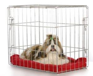 crated dog