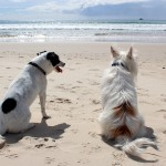 12 Pet Friendly Vacation Spots in the Mid-Atlantic
