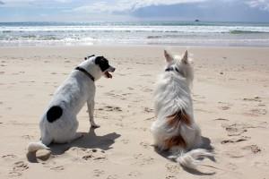 dog-648170_1280