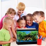 Top 5 Easiest Classroom Pets