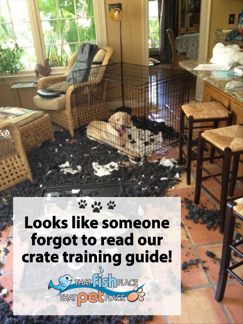 Crate Training Gone Wrong