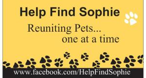 Help Find Sophie Is Helping Find Pets in Lancaster County