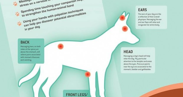How To Massage A Dog Becoming Your Dog S Masseuse That