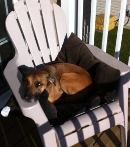 dog relaxing in sun