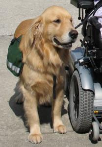 service-dog-1396291