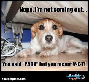 not going to the vet!