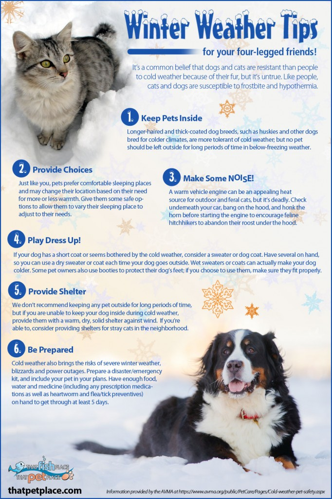 Winter Tips for Pets
